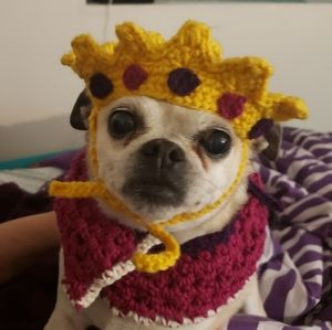 Crochet Royalty Pet Costume